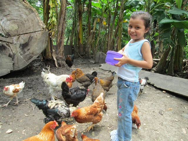 Poultry Projects
