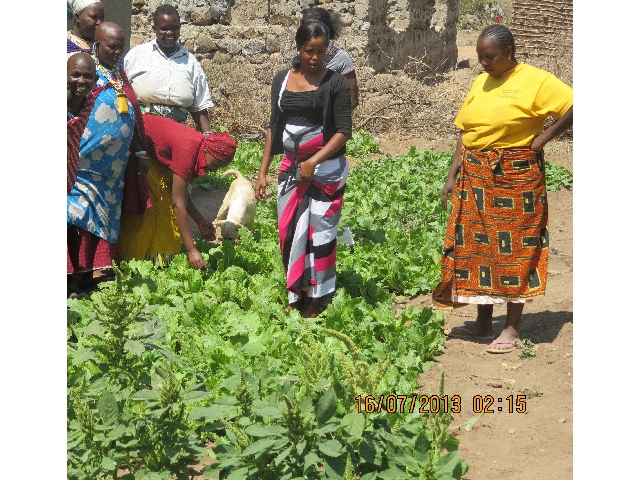 Vegetable Gardening for Income